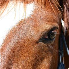 La otra mirada del caballo. #diariodeuninstagramer