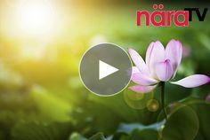 Video: 5 vägar till ett andligare liv