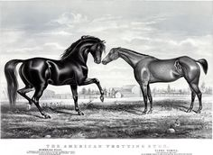 """From a Currier & Ives lithograph, this illustration is titled """"American Trotting Stud"""" and shows two racing horses. Text on the poster reads: """"Mambrino Pilot. By Mambrino Chief, Dam by Pilot Jr.. Grandam by Webster, by Lance, son of American Eclipse, Grandson of Imp. Messenger, Great. Grandam by Blackburns Whip."""" Additional text reads: """"Flora Temple. 'The Queen of the Turf.' Out of Madam Temple by One Eyed Hunter, He by Kentucky Hunter."""" Currier & Ives, 1866."""