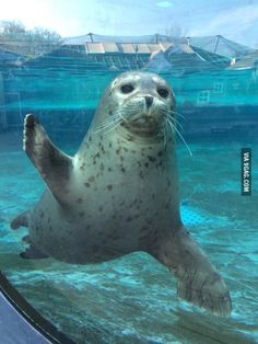 Met this cute seal at the zoo today, he even waved at me!