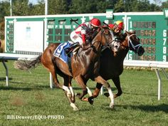 Strict Compliance Noses Out Isabella Sings To Win Boiling Springs - Horse Racing News | Paulick Report