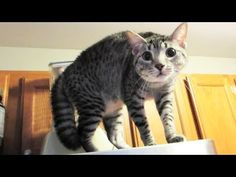 FUNNY CATS! - http://www.kittytalent.com/2014/11/funny-cats/