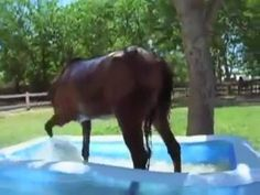 Be Right Back, Funny Horses, Theater, Hold On, Type, Facebook, Suddenly, Videos, Campaign