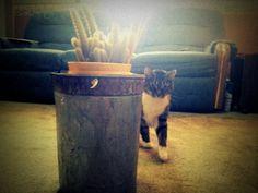 Vintage Rustic Galvanized Metal Flower Pot Pail by 1UniqueAntique, $17.98