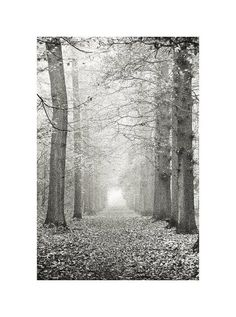 Forest art  Woodland photography  Tree art  Tree by JKphotography, €21.00