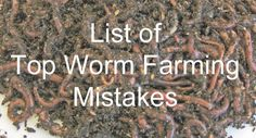 Gardening Compost Common worm farming mistakes that put you out of business. Organic Farming, Organic Gardening, Organic Fertilizer, Gardening Tips, Worm Farm Diy, Earthworm Farm, Worm Beds, Red Wiggler Worms, Fishing Worms