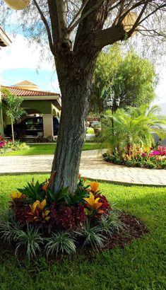 Busca imágenes de diseños de Jardines estilo moderno: CASA AA-14. Encuentra las mejores fotos para inspirarte y y crear el hogar de tus sueños.