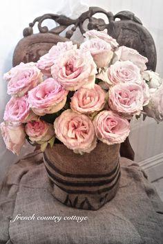 Loving my roses!