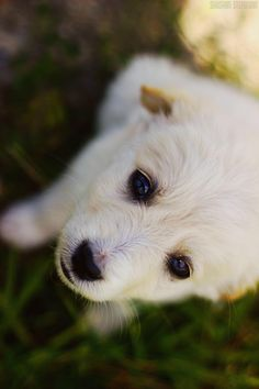 through eyes by Shushan Stepanian on 500px #dogs