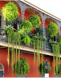 8 Startling Useful Tips: Tiny Backyard Garden Landscaping home garden ideas summer.Shabby Chic Garden Ideas The Doors garden ideas flower boxes.Garden Ideas New Zealand Ornamental Grasses. Hanging Ferns, Hanging Baskets, Iron Balcony, Balcony Door, Balcony Railing, New Orleans French Quarter, New Orleans Homes, New Orleans Decor, Most Beautiful Gardens
