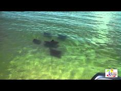 Snorkeling, shelling, and dolphin watching at Egmont key. | Island Ferry 727-742-2277 Florida 33706