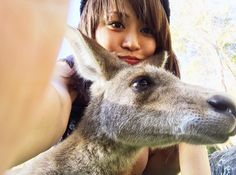 . この後キックされるとは露知らず  #負傷 #カンガルー #カンガルーキック #kangaroo #CurrumbinWildlifeSanctuary #lovery #love #cute #Australia #Goldcoast #Sydney #trip #travel #instagood #holiday #オーストラリア #一人旅 #冒険 by noomin_sy http://ift.tt/1X9mXhV
