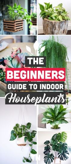 The Best Indoor Plants for Clean Air And Low Light Settings + 15 Planter Ideas Best Indoor Plants for clean air, best indoor plants for low light, large indoor plants, indoor plants for sale, planter ideas