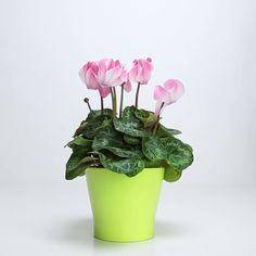 Growing Orchids, Growing Flowers, Planting Flowers, Plante Jasmin, Wilted Flowers, Jasmine Plant, Flower Pot Design, Fertilizer For Plants, Urban Gardening