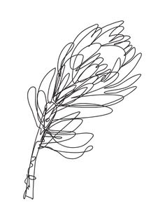 Abstract Protea Flower Continuous Line Drawing Art Print by zoya_art Flower Line Drawings, Botanical Line Drawing, Line Flower, Plant Drawing, Drawing Art, Art Drawings, Protea Art, Protea Flower, Blind Contour Drawing