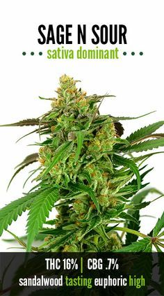 Join the cannabis enthusiasts social network: http://angrybud.com/buzzfeed