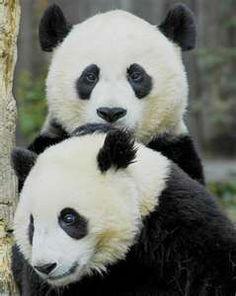 Wonderful but Endangered Animals.Hopefully zoo breeding program works!