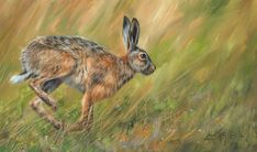 Hare by David Stribbling Galleries In London, Art Market, Oil Painting On Canvas, Hare, Rabbit, Wildlife, Pets, Artwork