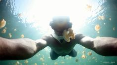 A swim through Jellyfish Lake, Palau – video