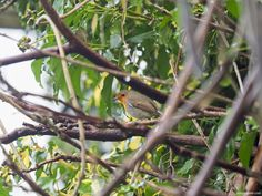 My RSPB Big Garden Birdwatch 2021 - Pumpkin Beth Big Garden Birdwatch, Meal Worms, Sunflower Hearts, Bird Identification, What Is A Bird, Saving Ideas, Container Plants, Wild Birds, Bird Watching