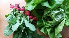 Was gibt es schöneres als die erste Ernte im Jahr 😍