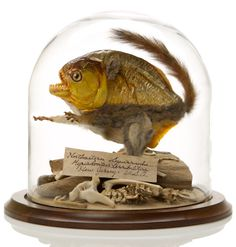 """New Jersey Squirranha  """"Found in the backwaters of New Jersey, our experts have had trouble identifying this creature. Half cuddly squirrel, half man-eating piranha, this entirely terrifying creature has been preserved by our expert taxidermists for further scientific research."""" (http://theevolutionstore.com/store/new-jersey-squirranha/)"""