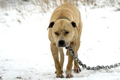 A Look Back: Hundreds of Dogs Rescued from Fighting in 2013 | ASPCA