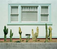 Cacti and pastels