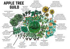 Forest Garden, Garden Trees, Garden Plants, Fruit Tree Garden, Apple Garden, Garden Bed, Permaculture Design, Permaculture Garden, Companion Planting