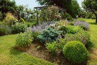 Arbustes à fleurs, arbustes à feuillage  - Jardins sans arrosage, jardiner sans eau, planter sans entretien