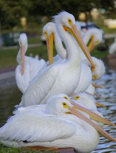 Title  Pelican Pile  Artist  Laurie Perry  Medium  Photograph - Photography
