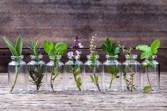 10 Kräuter, die ihr im Wasser aufziehen könnt. Und die ein ganzes Jahr lang im Haus blühen.