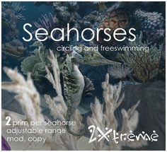 seahorses by :: 2Xtreme ::
