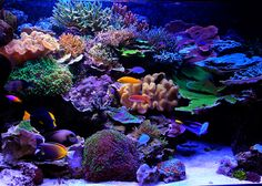 Reefs Magazine - Aesthetics of Aquascaping: Part 2 HookedOnReefs.com