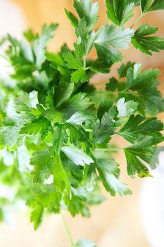 Italian flat-leafed parsley