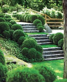 As a way to enliven the shady ground, James Doyle played with green tonalities, planting low irregular-sized boxwood balls beside beds of shiny-leaved Pachysandra terminalis and Vinca minor. Boxwood Landscaping, Boxwood Garden, Hillside Landscaping, Topiary Garden, Topiaries, Landscaping Ideas, Sloped Backyard, Sloped Garden, Hillside Garden