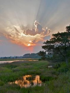 Night Heron Park, Kiawah Island, South Carolina