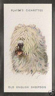 1940 ENGLISH SHEEPDOG Bobtail