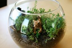 Make your own mini-ecosystem (terrarium) - fun for earth/ecology week!