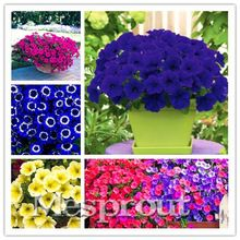 Cheap plants for homes, Buy Quality hanging petunia seeds directly from China petunia seeds Suppliers: 24 kinds Hanging Petunia Seeds,rare petunia seeds,bonsai flower seeds,plant for home garden Easy to Grow! Beautiful Flowers Garden, Love Flowers, Beautiful Gardens, Petunias, Planting Seeds, Planting Flowers, Potted Flowers, Flower Seeds, Flower Pots