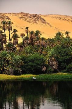 The banks of the Nile, Egypt Find cheap flights at best prices : http://jet-tickets.com/?marker=126022