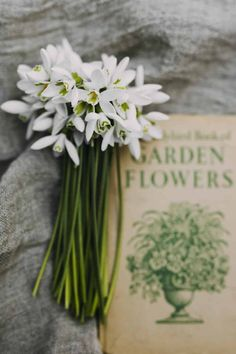 snowdrops with vintage book - flower photography tips and ideas from photographer Eva Nemeth including expert tips on how to create depth of field, work with light, texture, aperture and f stops to take beautiful flower and garden photographs Love Flowers, Spring Flowers, White Flowers, Beautiful Flowers, Month Flowers, Wedding Flowers, Creative Flower Arrangements, British Flowers, No Rain