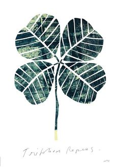Trifolium repens by Nygårds Maria Bengtsson | Poster from theposterclub.com