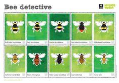 Identifying Bees Derbyshire Wildlife Trust