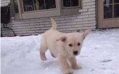 These 3 Vines Of A Puppy Playing In The Snow For The First Time Are The Only Internet Thing You Need