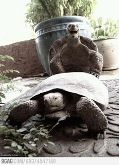 Turtle has funny time...