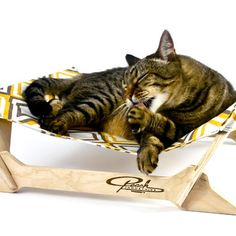 Heavenly Hammocks For Cats
