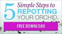 Repotting Guide Download