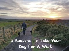 5 Reasons To Take Your Dog For A Walk – Project Pawsitivity Dog Lover Gifts, Dog Lovers, Dog Care, Dog Stuff, Fur Babies, Your Dog, Walking, Nutrition, Training