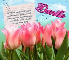 Danillo - prianie k meninám